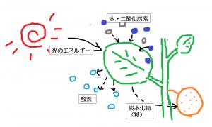 kougtousei-zu